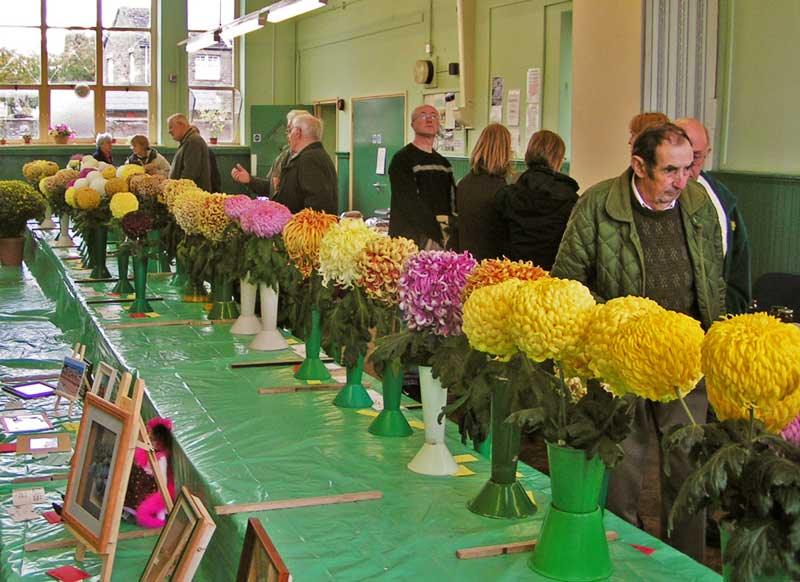 A photo of The 60th Bream Chrysanthemum Show taken in the West Dean Centre
