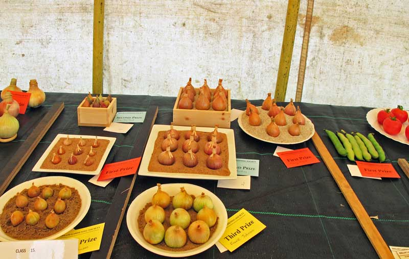 A photo of the shallots at the summer show 2015.